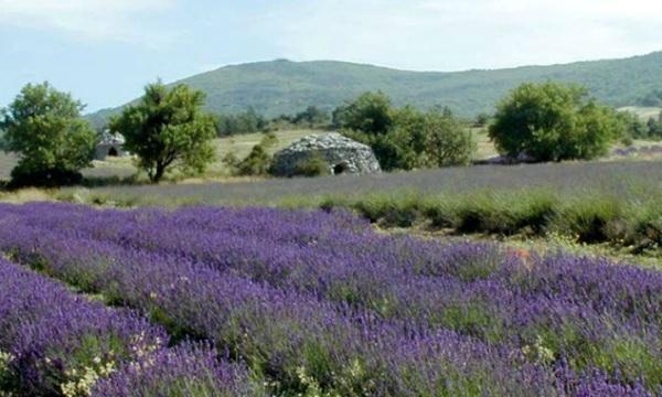 Provence - Aix Pigonnet 5